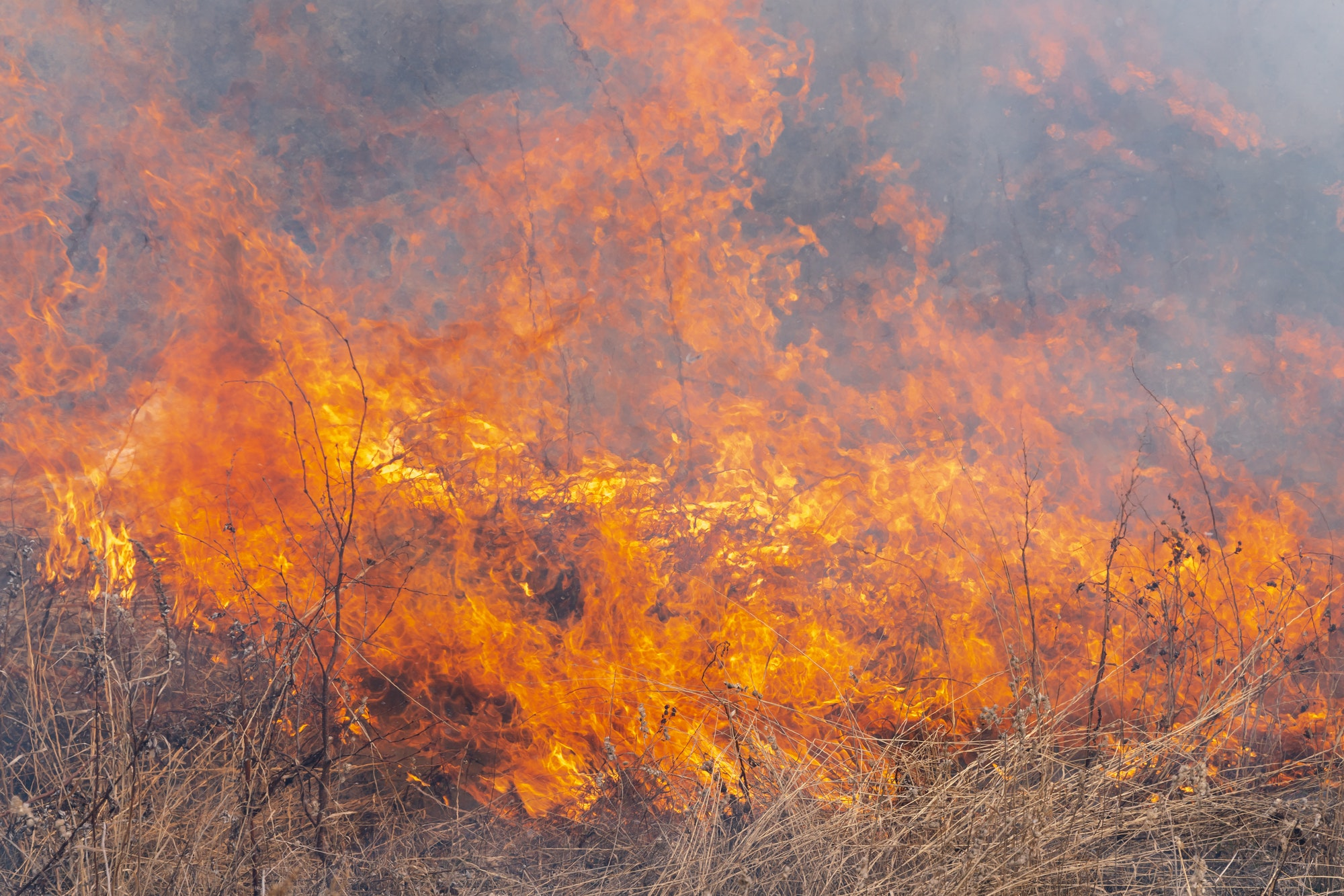 Red Flame of Fire with Different Figures on Background Burning Dry Grass in Spring Forest